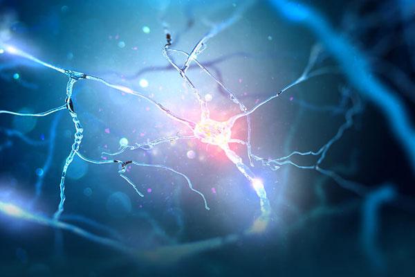 νευροεπιστήμη